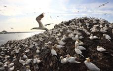 lezing_zeevogels