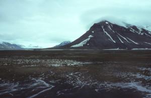 De in Nederland overwinterende brandganzen komen uit Spitsbergen. Door de permafrost is de toendra in de zomer constant drassig. (foto: Jacques van der Neut)