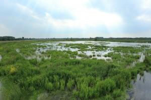 De vernatting van de Onnerpolder werkt als een magneet op water- en moerasvogels. (foto: Jacques van der Neut)