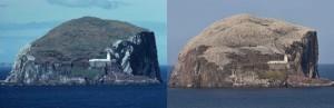 Zo zag de Bass Rock er in 1977 uit. De kop is begroeid met kruiden en grassen. In 2009 zag de kop wit van de broeden Jan van Genten. Alsof het had gesneeuwd. (foto; Jacques van der Neut)